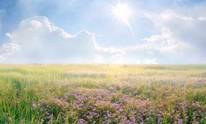 阳光下的花草自然风光摄影高清图片