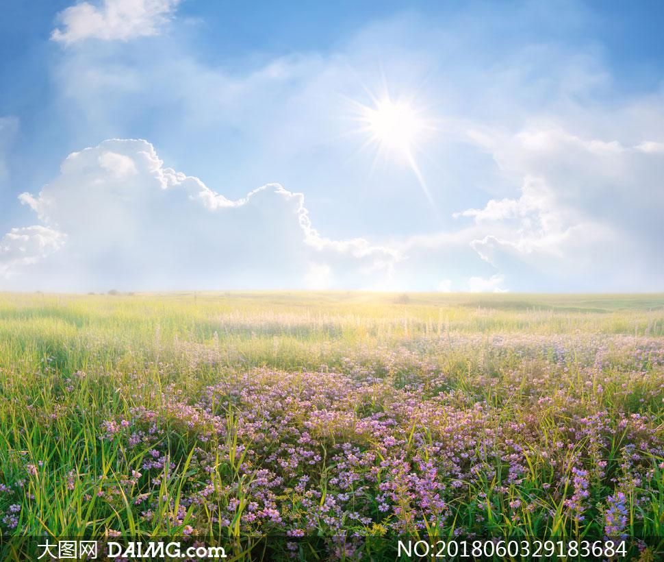 花草自然风光摄影高清图片下载 关 键 词: 高清图片大图素材摄影风景