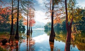 秋季湖泊中的大树美景摄影图片
