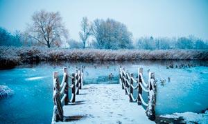 河边芦苇丛和木桥雪景摄影图片