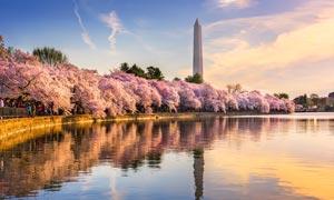 华盛顿国家纪念碑夕阳美景摄影图片