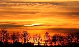海边枯树夕阳美景高清摄影图片