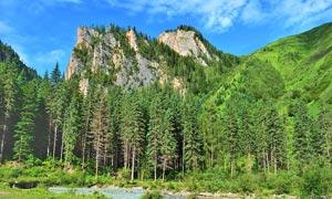 碧绿的山林美景摄影图片