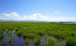 若尔盖湿地草原美景摄影图片