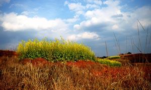 蓝天下的田园风光高清摄影图片