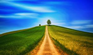 山坡上的小路与庄稼地摄影高清图片