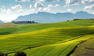 农田庄稼地与远处山峦摄影高清图片