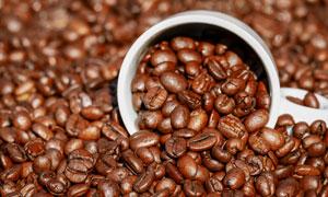 色泽饱满的咖啡豆微距摄影高清图片