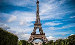 景观树木与埃菲尔铁塔摄影高清图片
