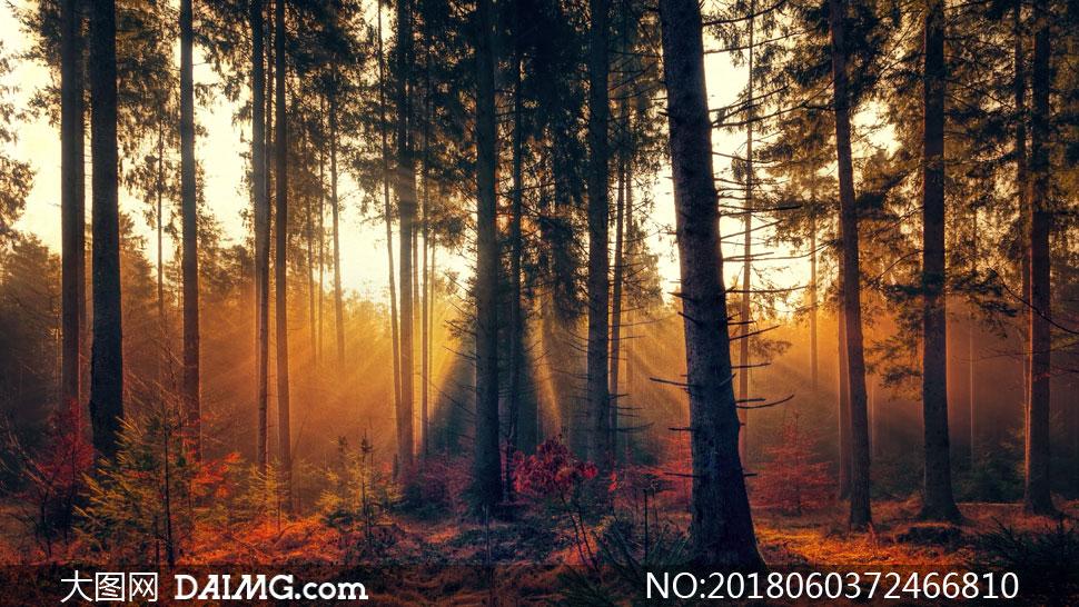 强光照耀下的树林风景摄影高清图片         在树林中的草地与大树