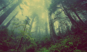雾气树林中的树木植物摄影高清图片