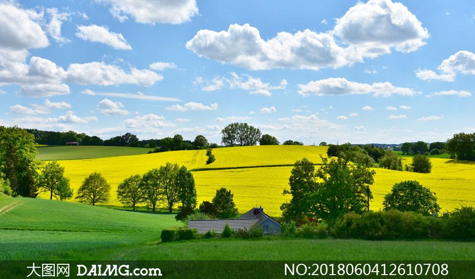 自然风景风光天空云彩云层多云白云蓝天大树树木农场农业农田田地油菜