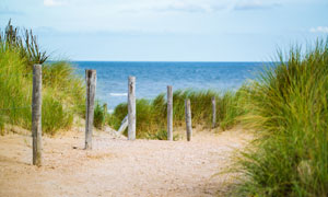海景与海边的草丛植物摄影高清图片