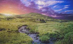 山坡上的溪水植被风景摄影高清图片