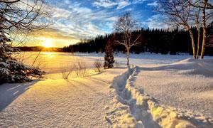 雪后蓝天白云树林风光摄影高清图片