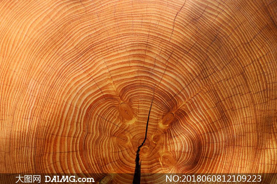 木头上清晰可见的年轮摄影高清图片
