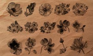 52款鲜艳的花朵装饰PS笔刷