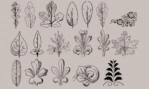手绘花纹和植物叶子PS笔刷