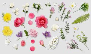 花瓣与玫瑰等花草植物元素分层素材