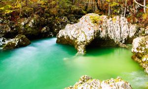 树林中的石头与潭水等摄影高清图片