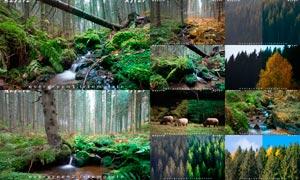 10款森林照片色彩清新通透效果LR预设