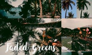 热带森林照片电影艺术效果LR预设