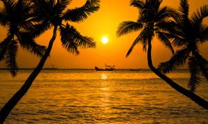 日落海景与椰树的剪影摄影高清图片