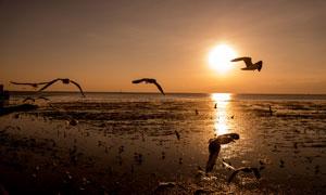 黄昏傍晚是的海上美景摄影高清图片