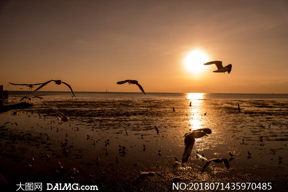 关 键 词: 高清图片大图素材摄影自然风景风光黄昏傍晚阳光夕阳日落天
