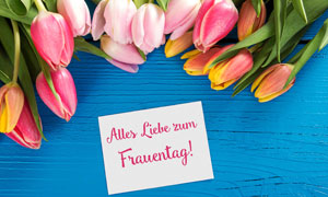 蓝色木板上的郁金香花摄影高清图片