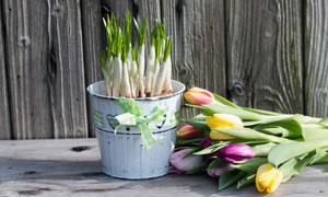 郁金香花朵与植物幼苗摄影高清图片