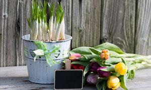 郁金香花束与花卉植物摄影高清图片
