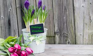 郁金香与盆栽花卉植物摄影高清图片