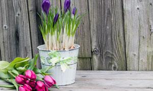 郁金香与紫色花卉植物摄影高清图片