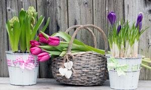 依次摆好以展示的花卉摄影高清图片