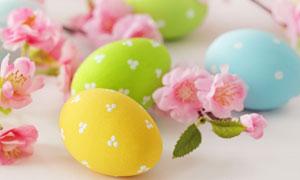 几枚彩蛋与粉色的樱花摄影高清图片