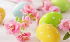 彩蛋与盛开的鲜花特写摄影高清图片