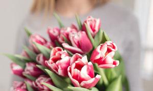 手里的红色郁金香花束特写高清图片