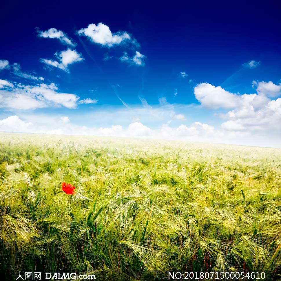 高清图片 自然风景 > 素材信息          阳光下的金色麦田美景摄影图
