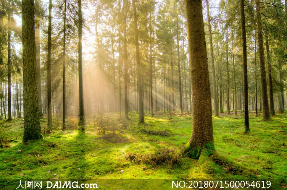 大图首页 高清图片 自然风景 > 素材信息          清晨森林中的树木