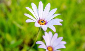 春夏时开放的鲜花特写摄影高清图片