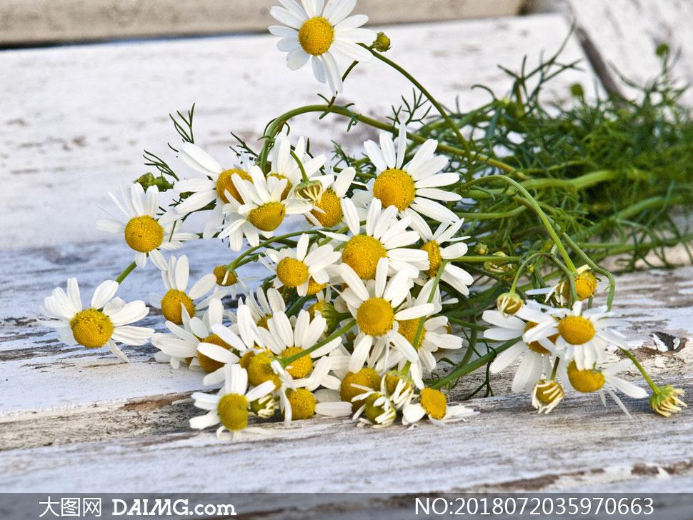 摘了放木板上的雏菊花摄影高清图片