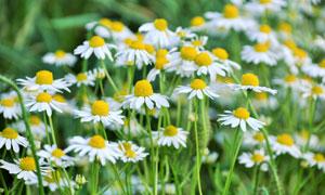 开放的花草丛风光特写摄影高清图片