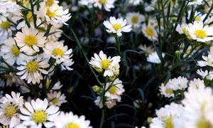春暖花开时节花卉植物摄影高清图片
