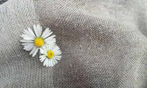 麻袋上的两朵菊花特写摄影高清图片