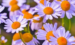 在风中摇曳的花卉植物摄影高清图片