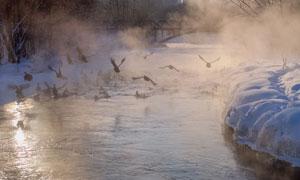 冬天水面上惊起的飞鸟摄影高清图片