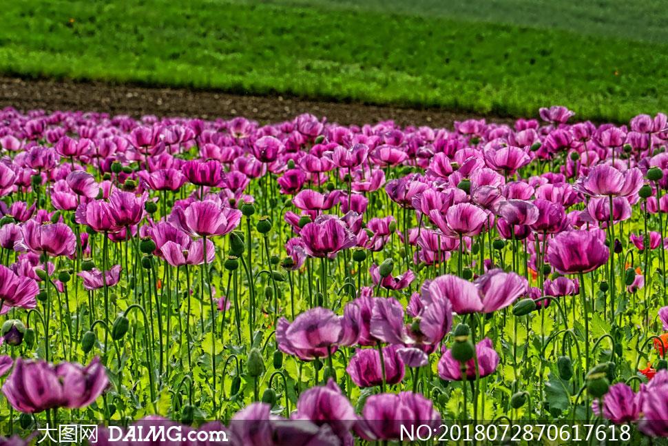 cc0; 关 键 词: 高清图片大图素材摄影自然风景风光鲜花花朵花卉植物