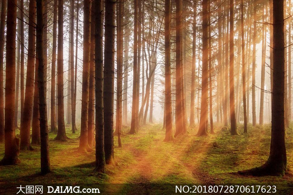 照射进阳光的树林自然风景高清图片 - 大图网设计素材