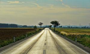 两边是农田庄稼的公路摄影高清图片